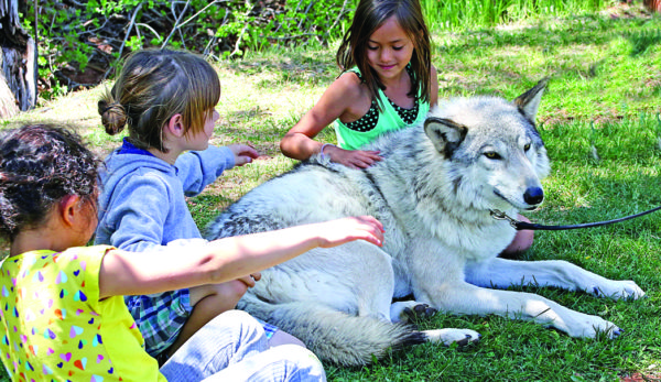 Children petting a gray wolf