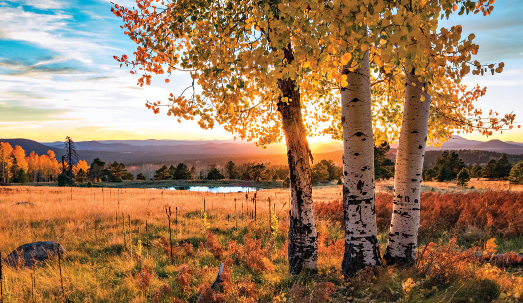 Fall for Flagstaff