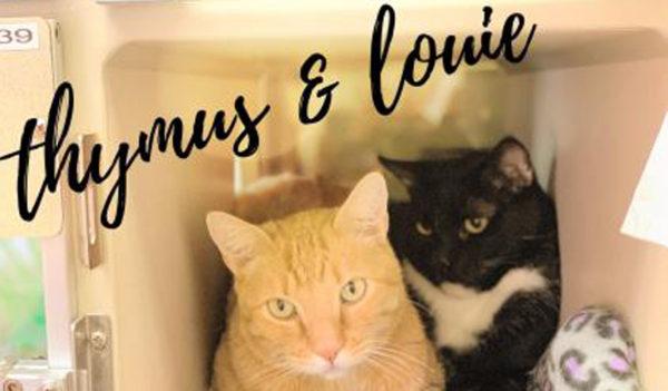Thymus & Louie